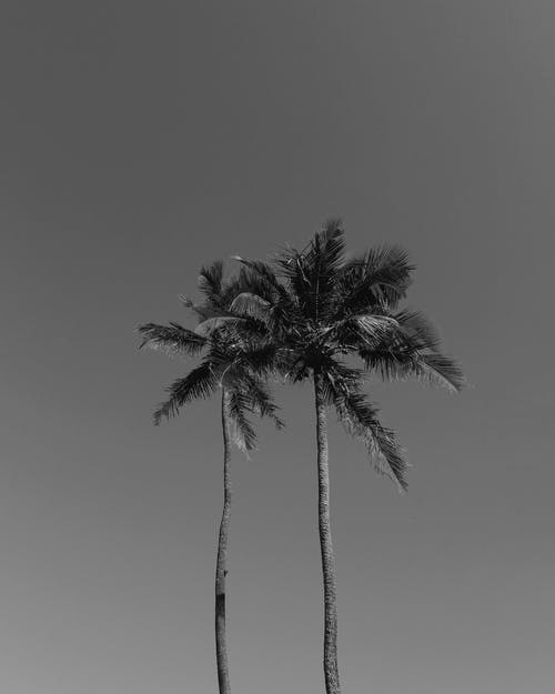 Palm trees on background of sky