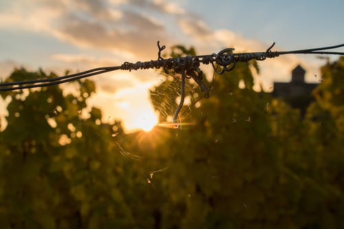 Free stock photo of rheingau, spider, spiderweb