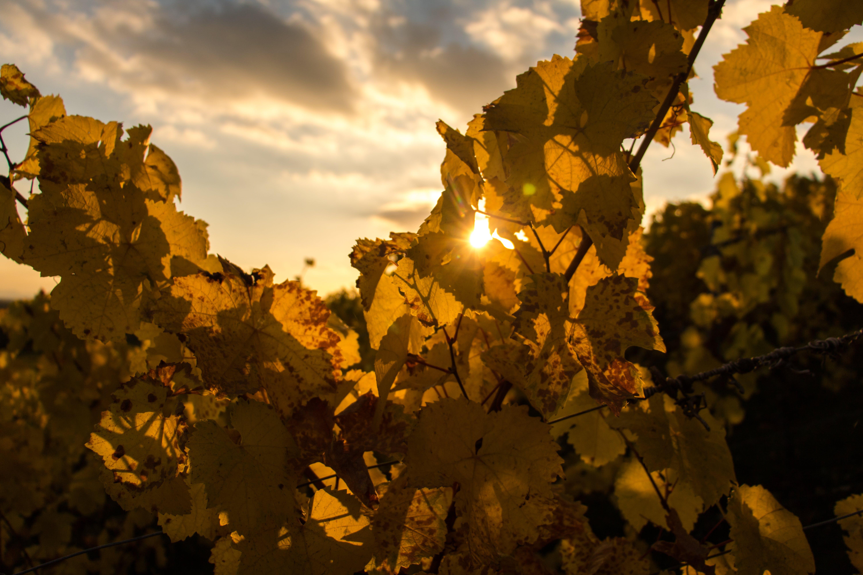 Free stock photo of autumn, autumn leaf, fall, leaf