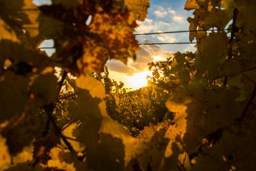 Free stock photo of rheingau, sun, sunset