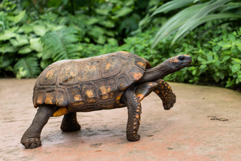 Free stock photo of tortoise, turtle
