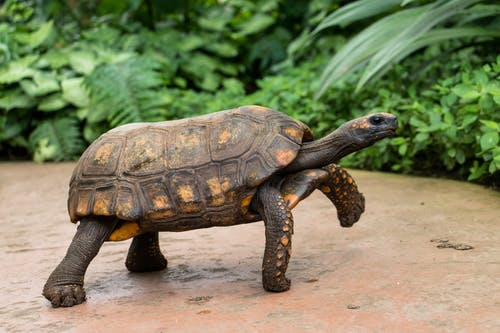 Free stock photo of tortoise, turtle