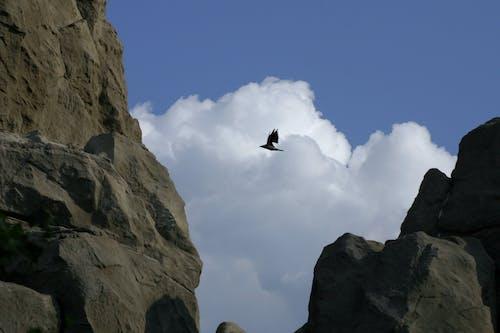 Kostnadsfri bild av fågel, moln, rock