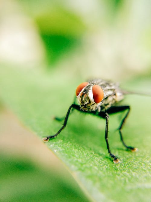 Macro Photography of a Fly Perched on a Leaf