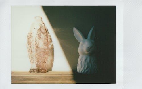 Fotos de stock gratuitas de animal, conejito, Conejo, contraste