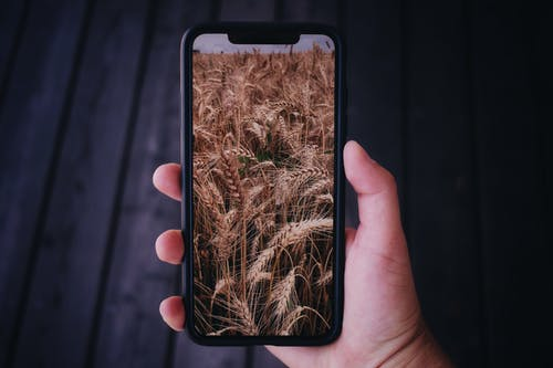 Free stock photo of agriculture