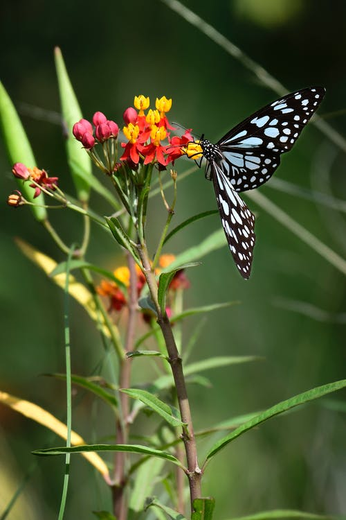 Fragile butterfly with white spots on wings on bright gentle flowers in blossom on blurred background