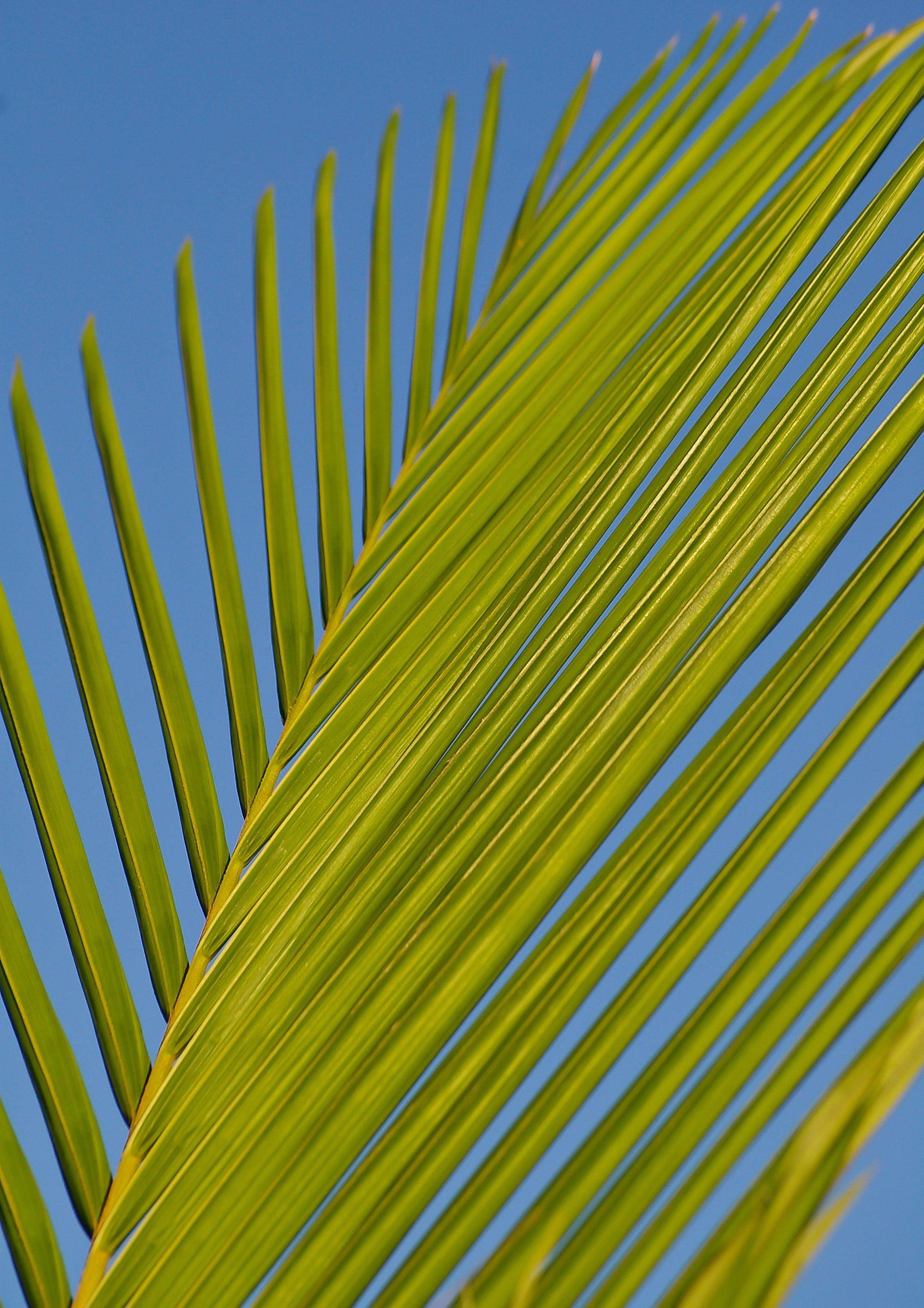 Green Palm Tree Branch during Daytime