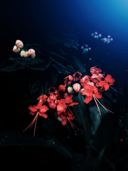 Red and White Flowers on Water