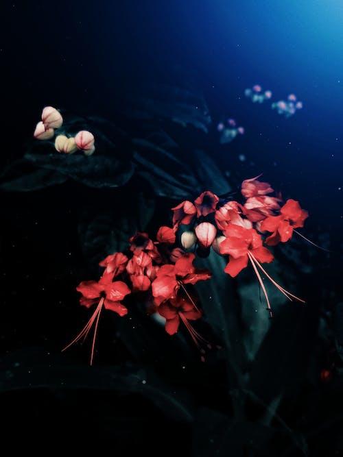 Kostenloses Stock Foto zu blume, draußen, dunkel, exotisch