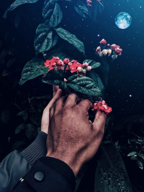 Person Holding Red Flower With Green Leaves