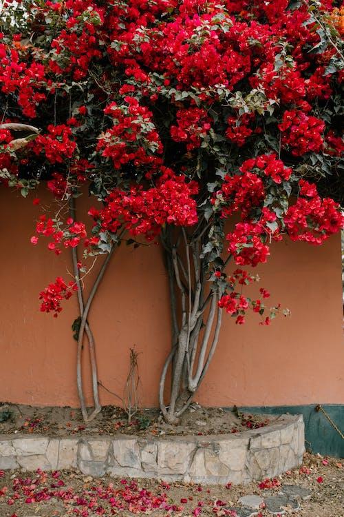 Planta De Folha Vermelha E Verde