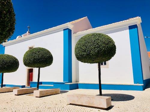 Imagine de stoc gratuită din alb, albastru, arbore, arhitectură