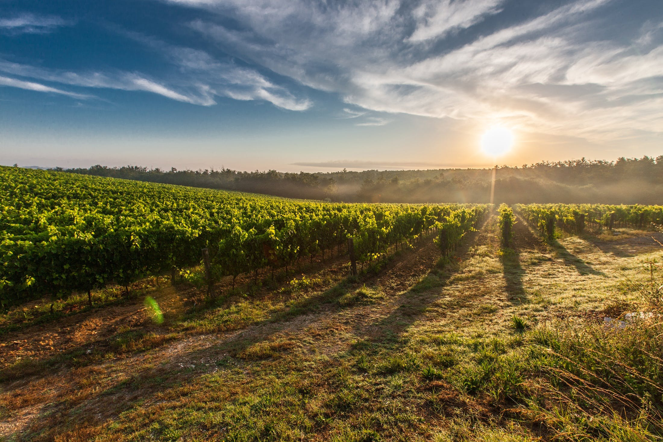 Farm Land during Sunset