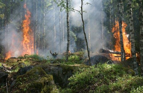 Foto profissional grátis de ardente, chama, combustão, diário