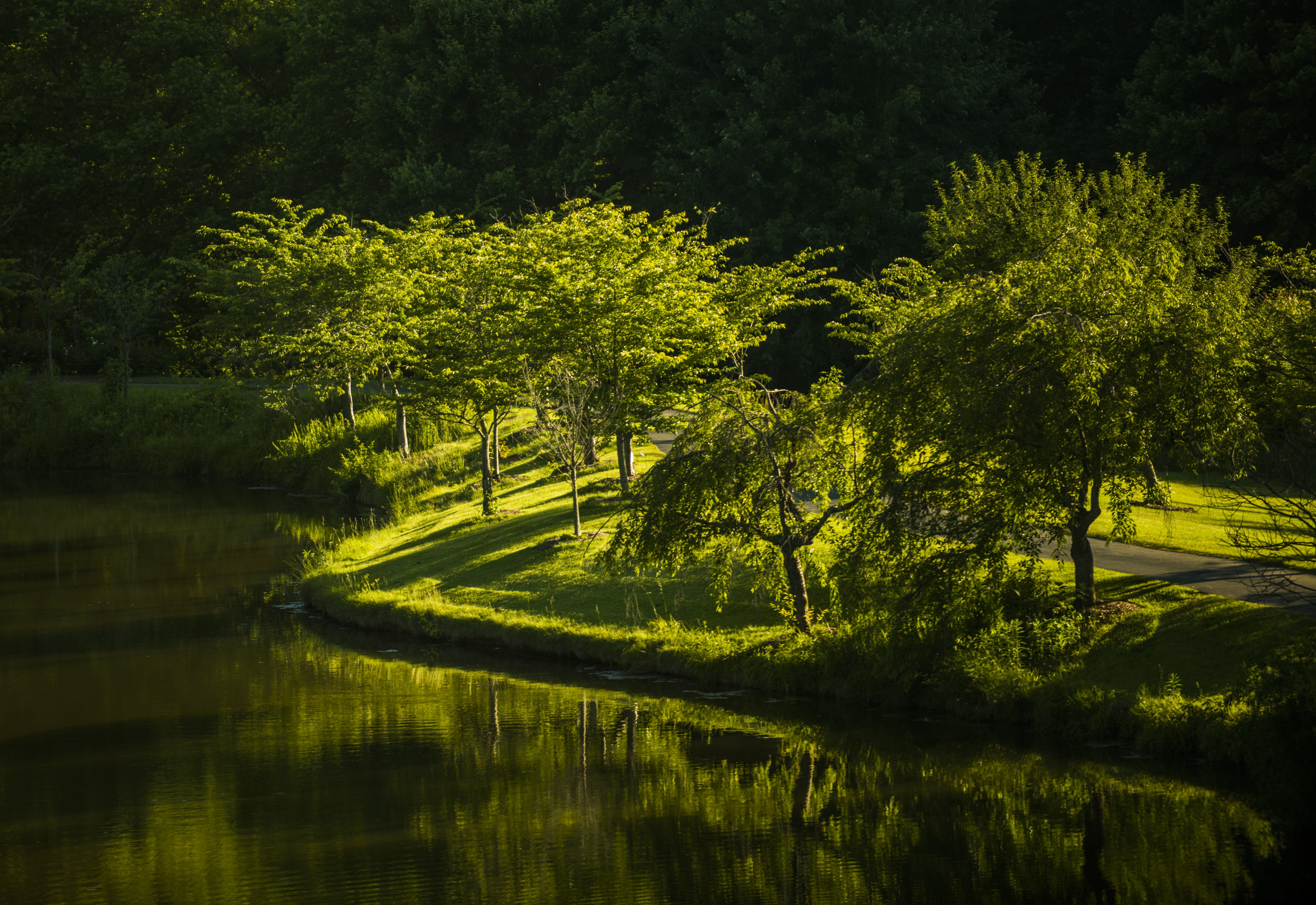 Water Reflecting Green Leafed Treees
