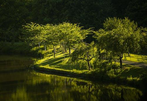 Photos gratuites de arbres, bassin, eau, lumière du soleil