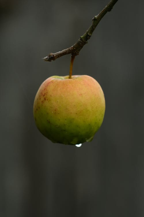 Green Round Fruit on a Stem With Water Droplet