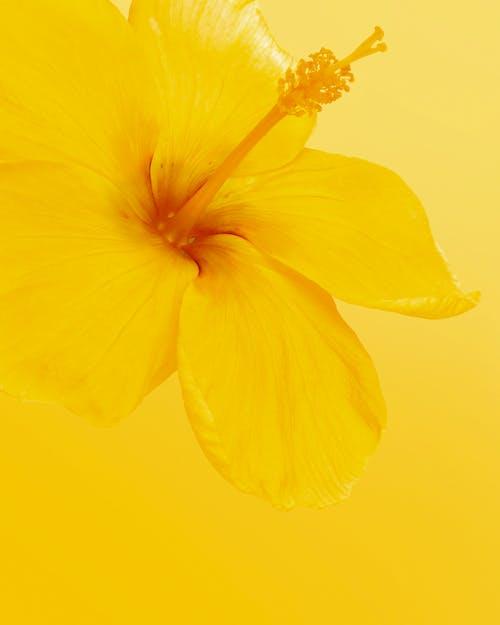 Imagine de stoc gratuită din aloha, culoare, delicat