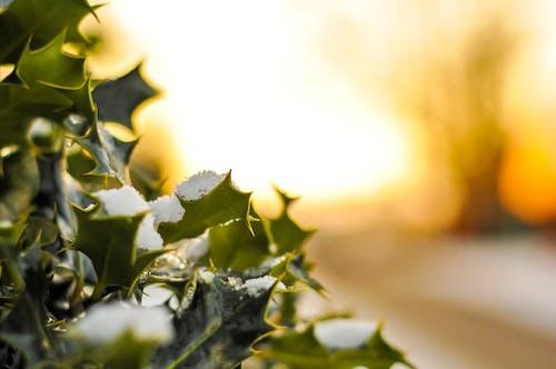 Kostenloses Stock Foto zu busch, natur, pflanze, sonnenaufgang