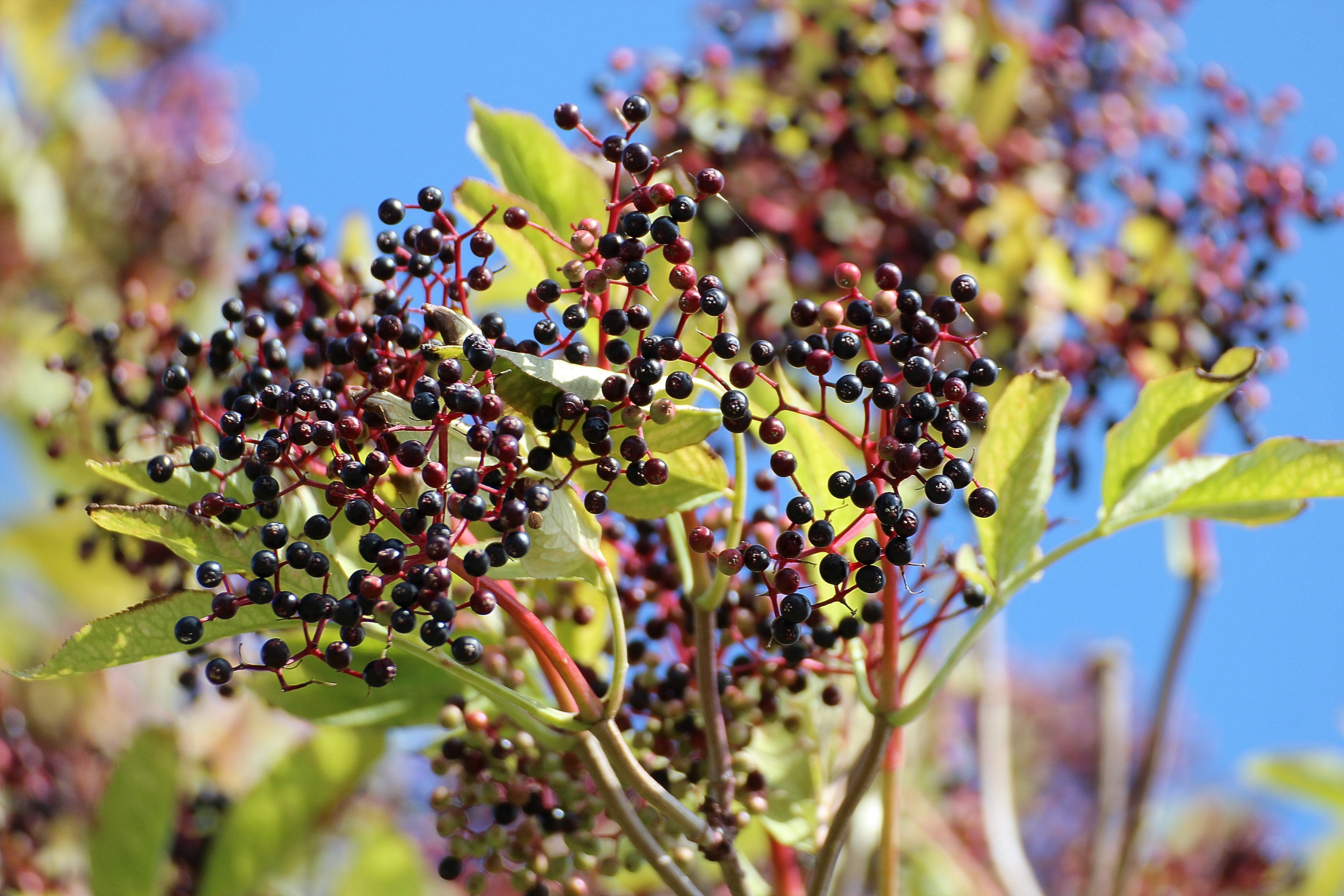 Black Round Fruits at Daytime