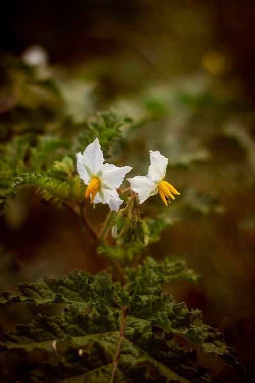 Kostenloses Stock Foto zu amazing nature, blume, blumen, flor