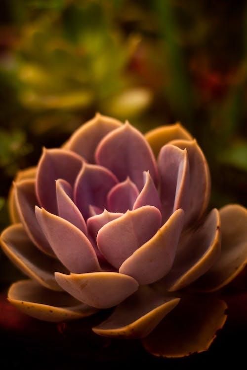 Green and Brown Flower in Tilt Shift Lens
