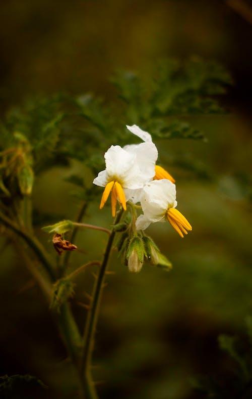 Kostenloses Stock Foto zu blume, blumen, flor, flor intensa