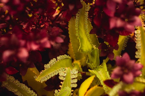 Free stock photo of flower, flowers, intense nature, juice