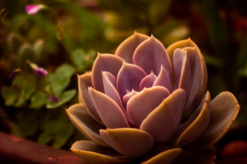 Free stock photo of flower, intense flower, nature
