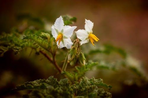 Free stock photo of flower, nature, wild