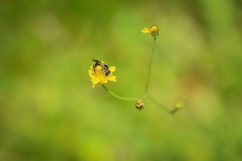 Photos gratuites de abeille, brouiller, croissance, espace extérieur