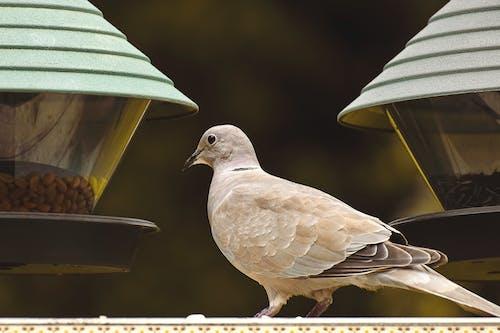 Photos gratuites de aile, aliments, animal, aviaire