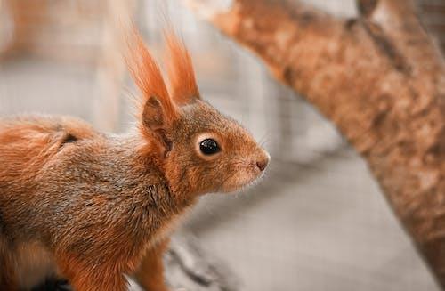 Photos gratuites de amusant, animal, bois, cheveu