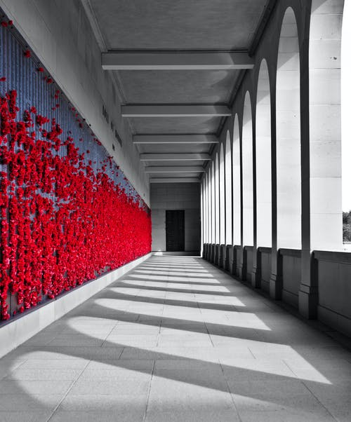 Foto stok gratis bagian, bunga merah, dinding