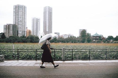 Kostenloses Stock Foto zu andando com umbela, architektur, baum, business