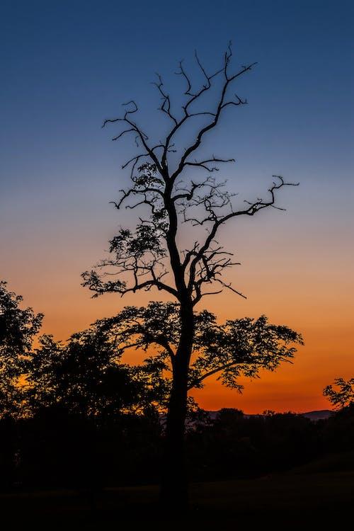 Gratis lagerfoto af aften, farver, grene, humør