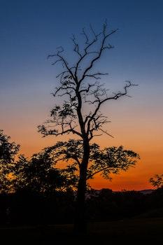 Kostenloses Stock Foto zu natur, sonnenuntergang, sonnenaufgang, silhouette