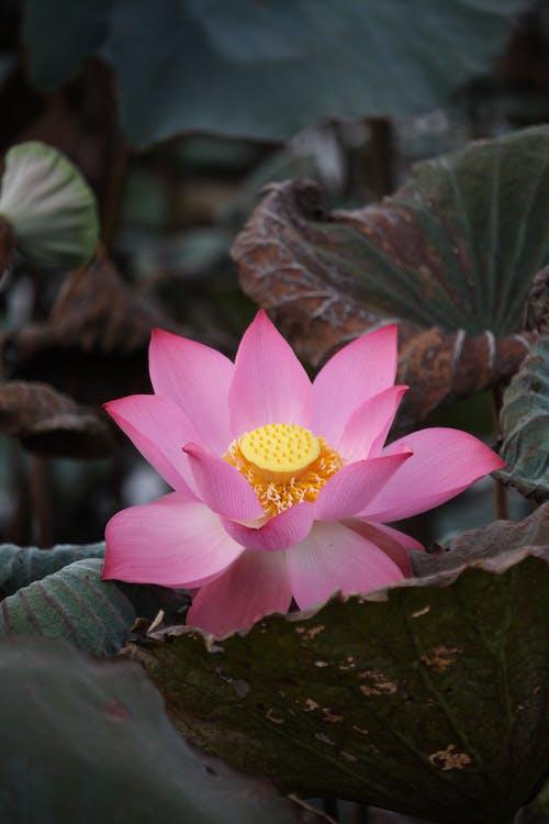 微妙, 植物的, 植物群 的 免费素材图片