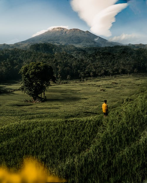 Person in Yellow Jacket Walking on Green Grass Field