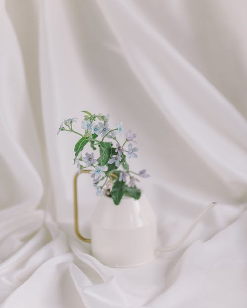 morta natural com flors azuis, ブルナー, フロールアズィスemフンドブランコ 的 免费素材图片