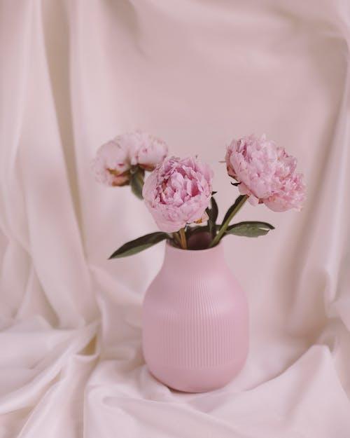 ainda vida com les persones, grundierung pla depeònia, natura morta suau com florsの無料の写真素材