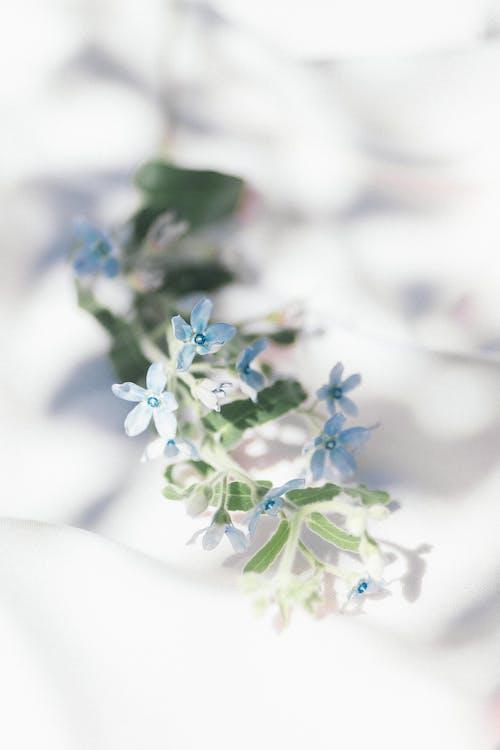 คลังภาพถ่ายฟรี ของ morta com ธรรมชาติ flors azuis, การตกแต่ง, การถ่ายภาพหุ่นนิ่ง, การแต่งงาน