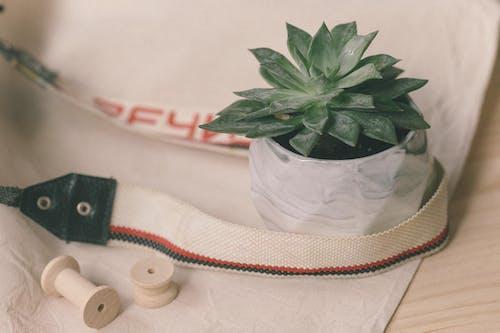 Green Plant on White Plastic Bag