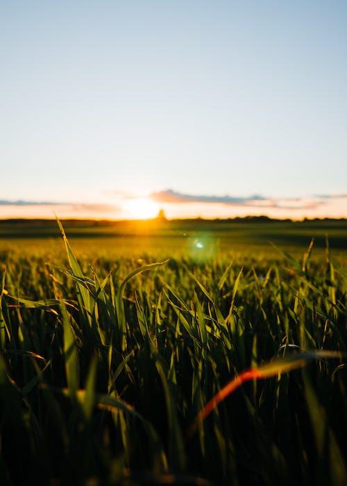 Бесплатное стоковое фото с закат, золотой, лето, луч