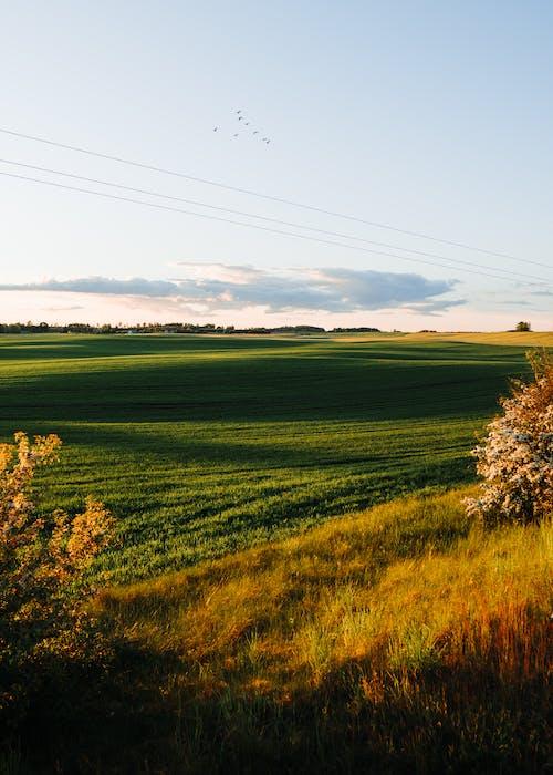 Ảnh lưu trữ miễn phí về ánh sáng, bình minh, cánh đồng, cỏ