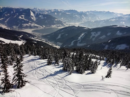 From above of snowy slope of mountains with ski traces among evergreen woods in sunlight
