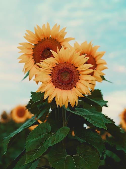Gratis lagerfoto af blad, blomst, efterår