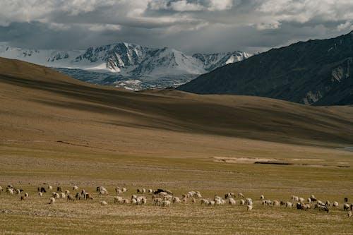가정의, 가축, 간, 경치의 무료 스톡 사진
