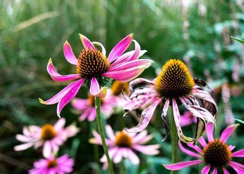 Ilmainen kuvapankkikuva tunnisteilla alankomaat, bloemen, eksoottinen, groen